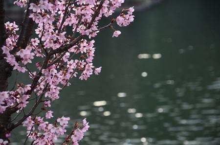 夜桜風に~~
