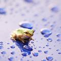Photos: 雨が気持ちいい