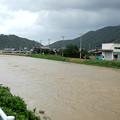 写真: ハス川(氾濫危険警戒水位)