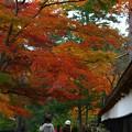 写真: 今年の紅葉