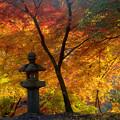 写真: 秋月城址の紅葉