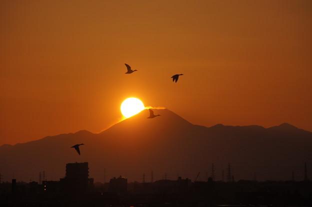 Photos: 富士山に沈む夕日、舞うカモ