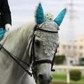 写真: 川崎競馬の誘導馬06月開催 紫陽花Ver-120613-08-large