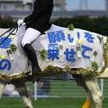 写真: 川崎競馬の誘導馬07月開催 七夕飾りVer-120702-11-large