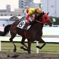 写真: 121105川崎02R週刊競馬ブック賞 優勝エヴァープレッジ