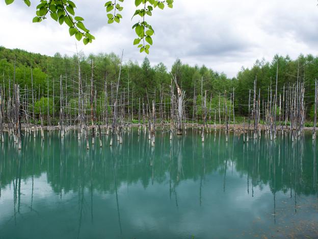 青い池(1)