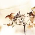 セピア陽花