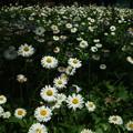 写真: 木陰の花畑