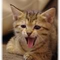 Photos: 子猫たち
