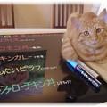 Photos: お部屋