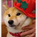 Photos: 帽子をかぶって