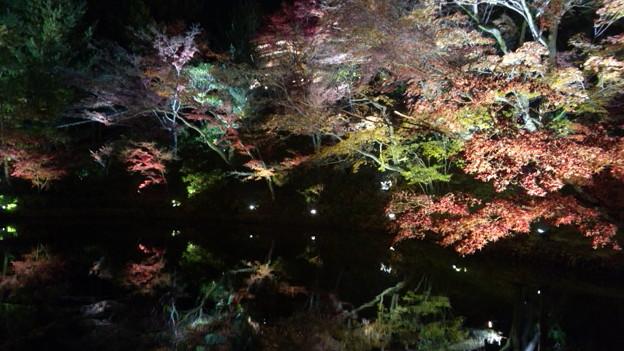 Photos: ライトアップされてる臥龍池...