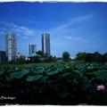 TOKIOの夏