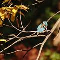 ナニワの秋は。。