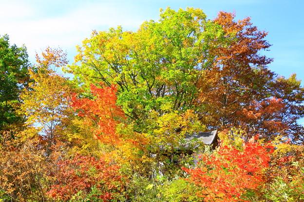 黒湯温泉の神社の紅葉