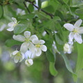 Photos: 小岩井に咲く花