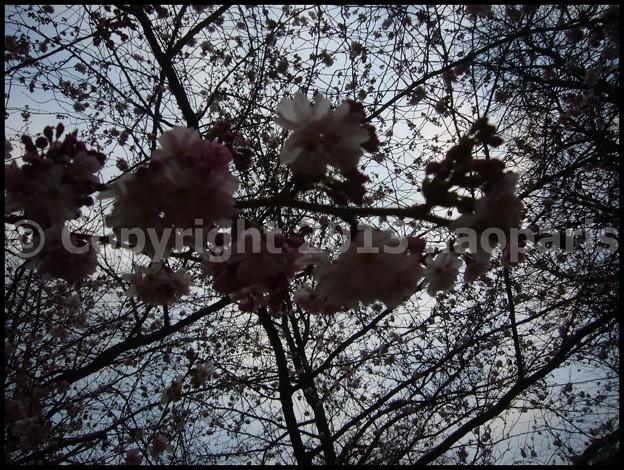 Photos: P3440961