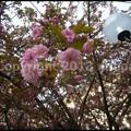 写真: P3470331