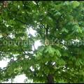 写真: P3480488
