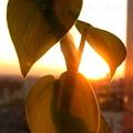 Photos: 職場の窓から2012.10.25代々木