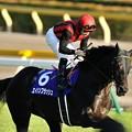写真: 天皇賞秋返し馬 #エイシンフラッシュ 2