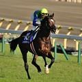 写真: 天皇賞秋返し馬 #トーセンジョーダン