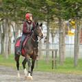 Photos: 見学コースの目の前をぽっくりぽっくりやってくるお馬さん。ちなみに赤帽は愛知ステーブル。