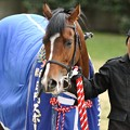 Photos: [中山金杯14]青い馬着にもあってる