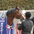 Photos: [中山金杯14]池江先生に拭き拭きしてもらってるオーシャンブルーの表情・・・