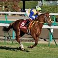 [AJCC2009]返し馬に入るエアシェイディ&後藤