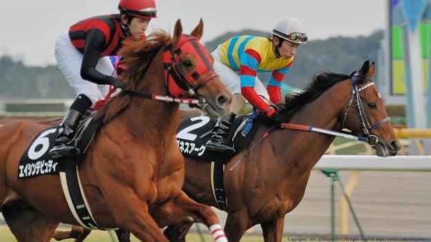 [早春S07]片や後のG?馬となるエイシンデピュティと片や後の秋天2着馬となるアグネスアークの豪華な併せ馬