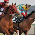 Photos: [早春S07]片や後のG?馬となるエイシンデピュティと片や後の秋天2着馬となるアグネスアークの豪華な併せ馬