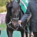 Photos: [東京新聞杯09]?ローレルゲレイロ