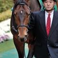 Photos: [東京新聞杯09]?ゲイルスパーキー