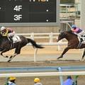Photos: [4上5下ダ17]直線、先に抜け出したメイショウソラーレ(藤懸)をサナシオン(松田)が再度突き放す