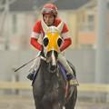 Photos: [140305川崎11Rエンプレス杯]レオキラメキ(江川伸)