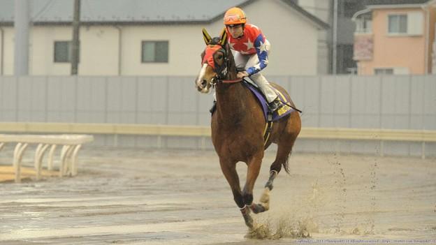 [140305川崎11Rエンプレス杯]最後の返し馬に入るクラーベセクレタ(御神本)