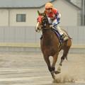 Photos: [140305川崎11Rエンプレス杯]最後の返し馬に入るクラーベセクレタ(御神本)