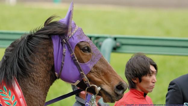 [070311中山11R中山牝馬S]マイネサマンサ「蛯名さんも素っ気ないわ。お別れが寂しいのかしら…」(サマンサへの騎乗は4年ぶりです)