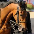 [140316中山11R中山牝馬S]キャトルフィーユは美人さんですねえ