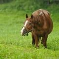 Photos: [100824畠山牧場]少し周りが気になるみたいだけど草が歯に刺さったままっすよ #シルクジャスティス20歳おめでとう