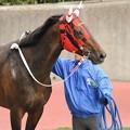 Photos: [140329中山11R日経賞]表彰式を遠い目で眺めるウインバリアシオン