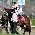 [140329中山11R日経賞]ホッコーブレーヴ(田辺)「鞍上はなんて顔してくれてるんだ」