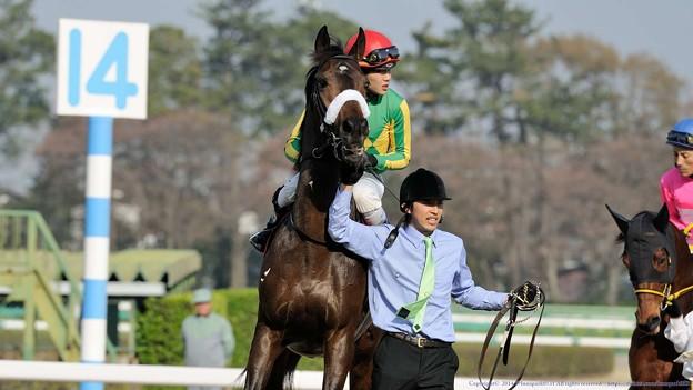 [140329中山11R日経賞]サトノアポロ(三浦)「はいはい、あっちいけばいいのね、はい」
