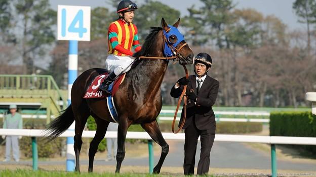 [140329中山11R日経賞]ジャガーメイル(石橋脩)は軽めにジロリ #ジロリ馬