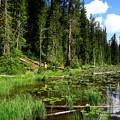 Yellowstoneの夏。。。Mo~m can you see me~~~~~?!