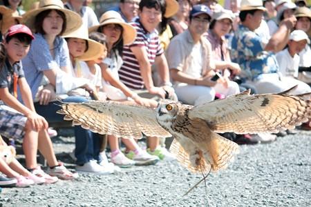 H25.9 掛川花鳥園 13