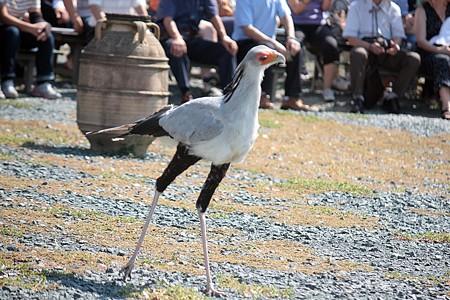 H25.9 掛川花鳥園 14