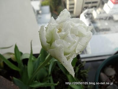 Photos: DSC09585