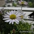 Photos: DSC09902
